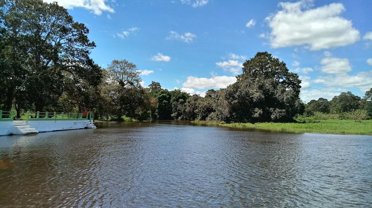 Peixe-Boi Pará fonte: static.consolidesuamarca.com.br